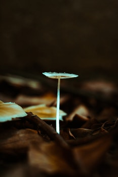 Free stock photo of nature, mushrooms