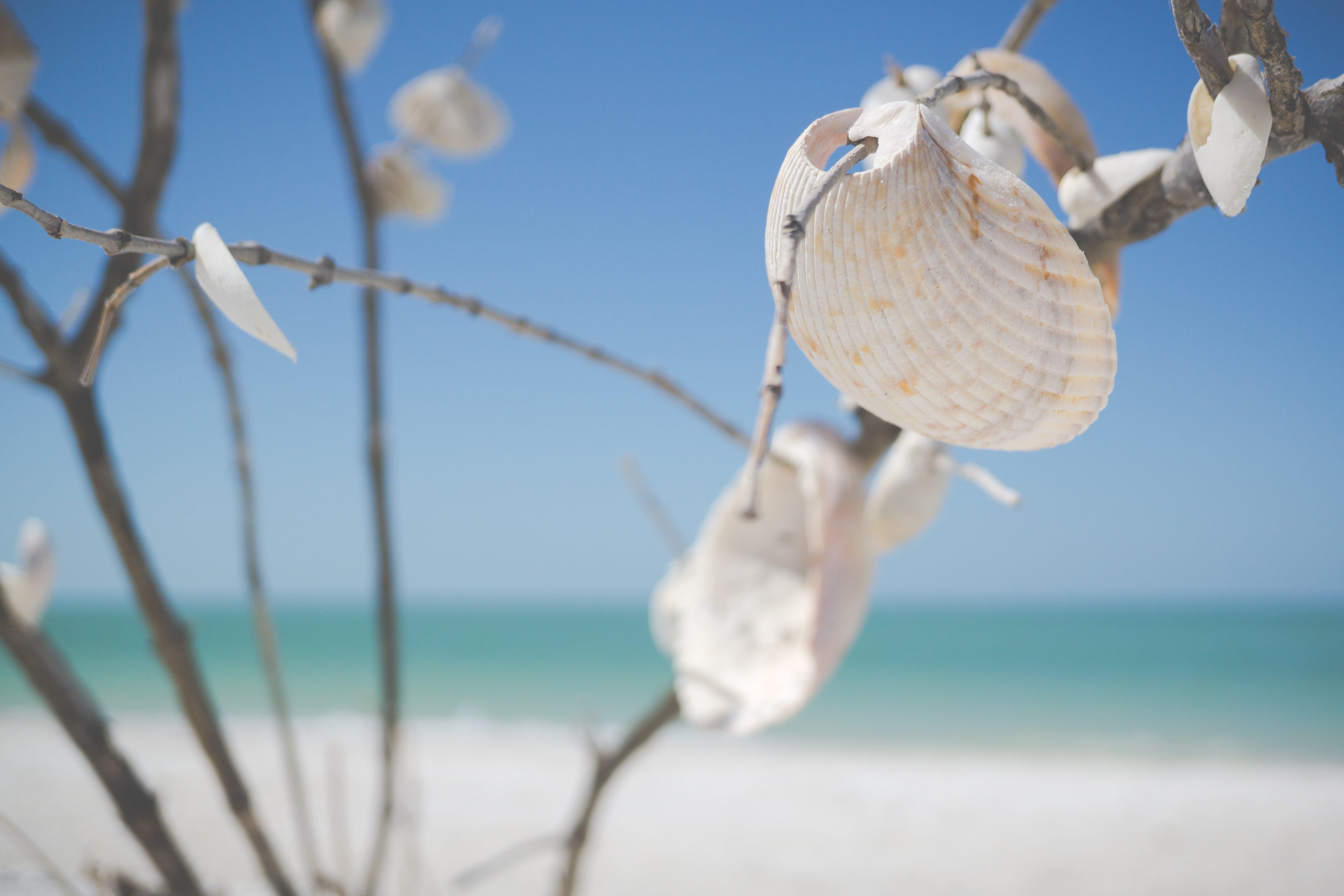 White Decorative Shells