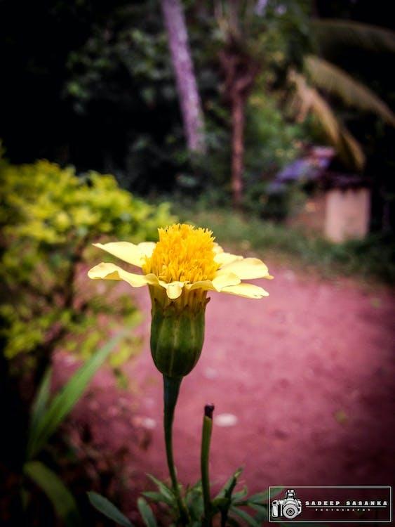 sadeep sasanka, фотографія природи, Шрі-Ланка