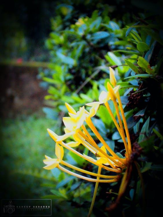 bloem, natuurfotografie