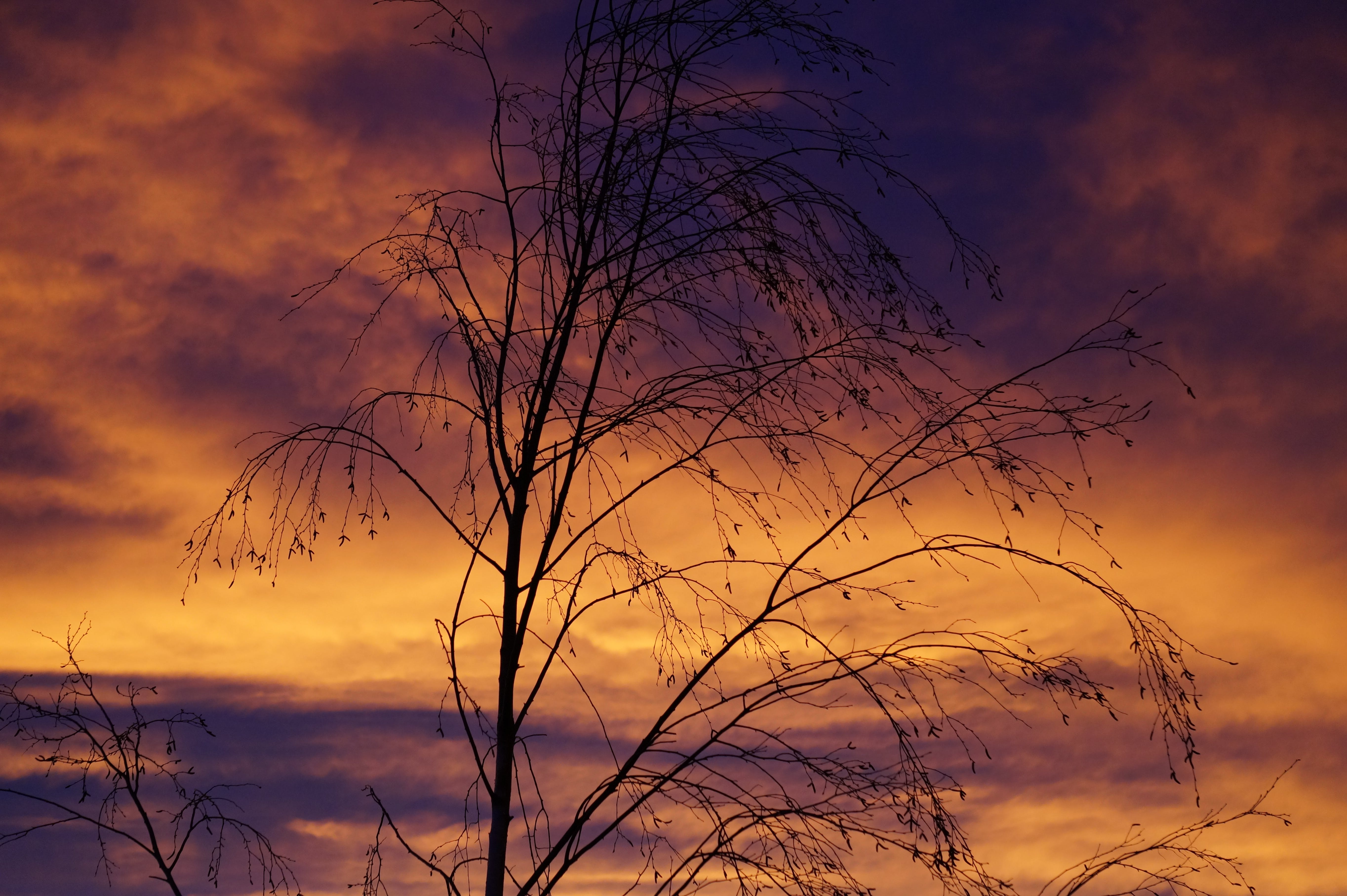 branches, clouds, silhouette