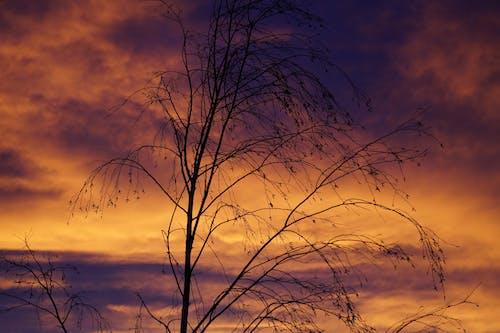 分支機構, 天空, 日出, 日落 的 免費圖庫相片