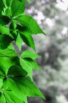 Free stock photo of leaves, green, bokeh
