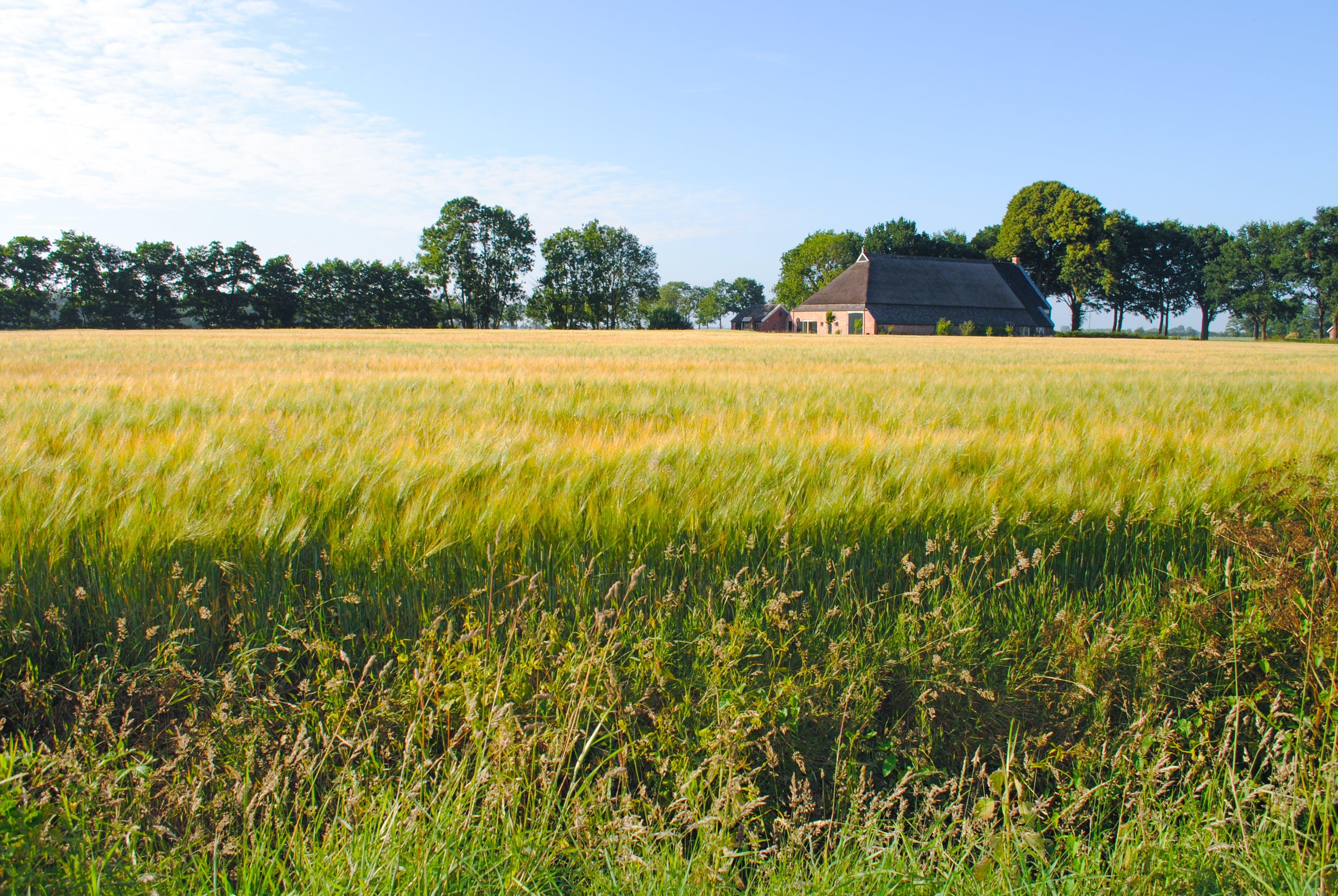 Kostnadsfri bild av åkermark, bete, bondgård, fält
