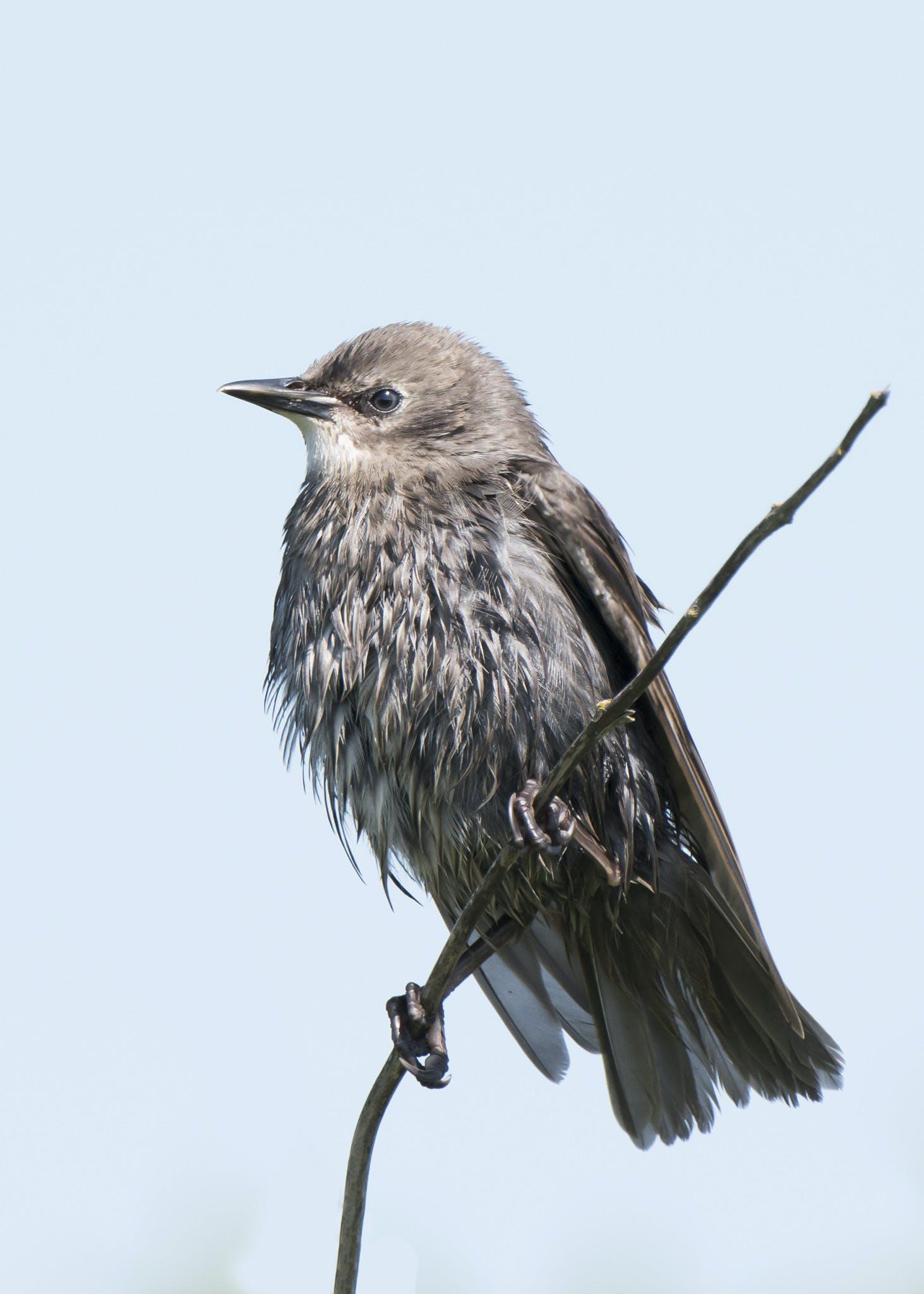 Black and Gray Bird on Tree Brunch