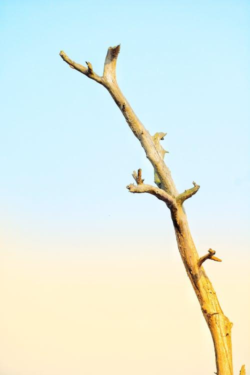 คลังภาพถ่ายฟรี ของ กิ่ง, ต้นไม้, ต้นไม้ตาย, ทำด้วยไม้