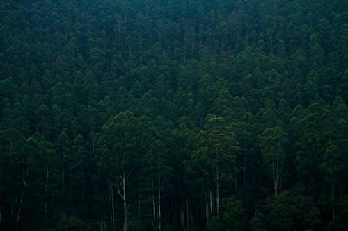 คลังภาพถ่ายฟรี ของ กลางแจ้ง, ทัศนียภาพ, ทำด้วยไม้, ธรรมชาติ