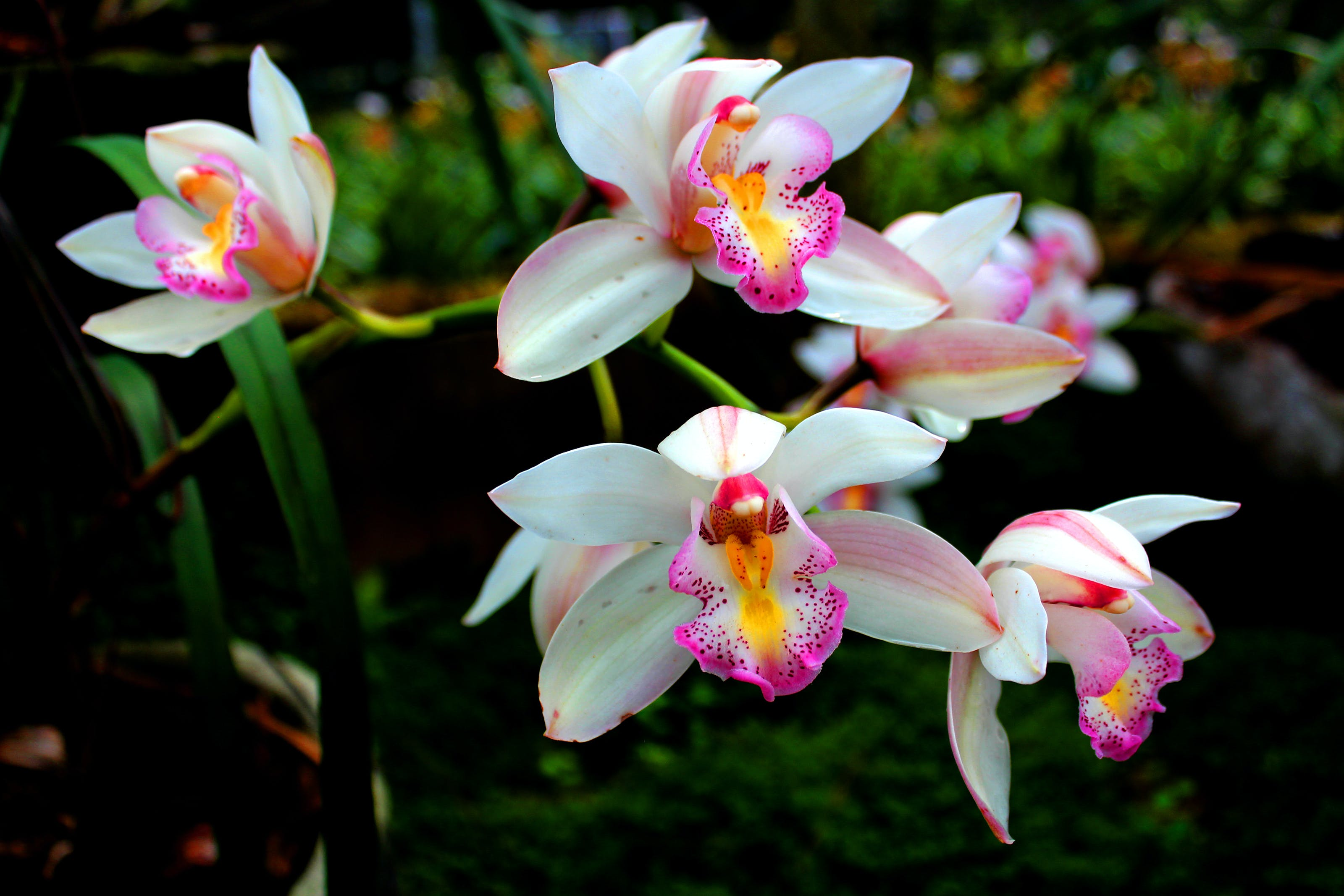 Close-up Photography of Orchids