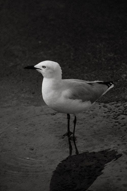 Free stock photo of beach, bird, ocean