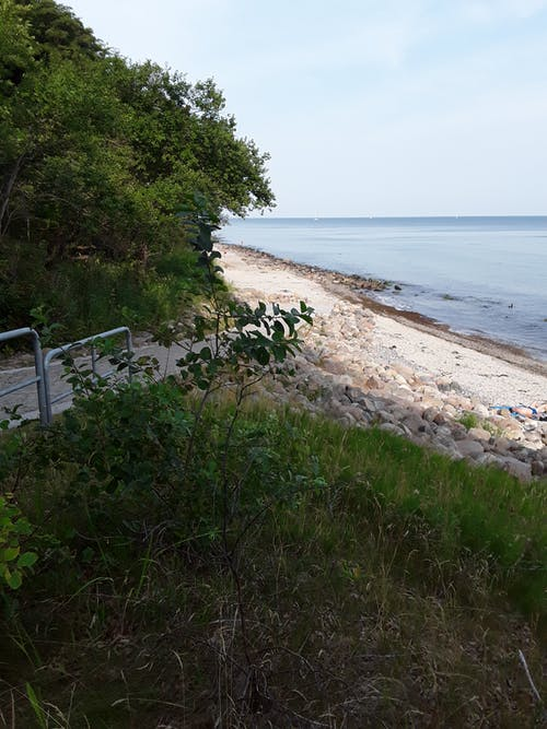 樹木, 海, 海滩景色 的 免费素材图片