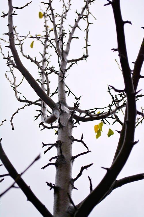Gratis stockfoto met bewolkte lucht, bomen, boomstam, dode bomen
