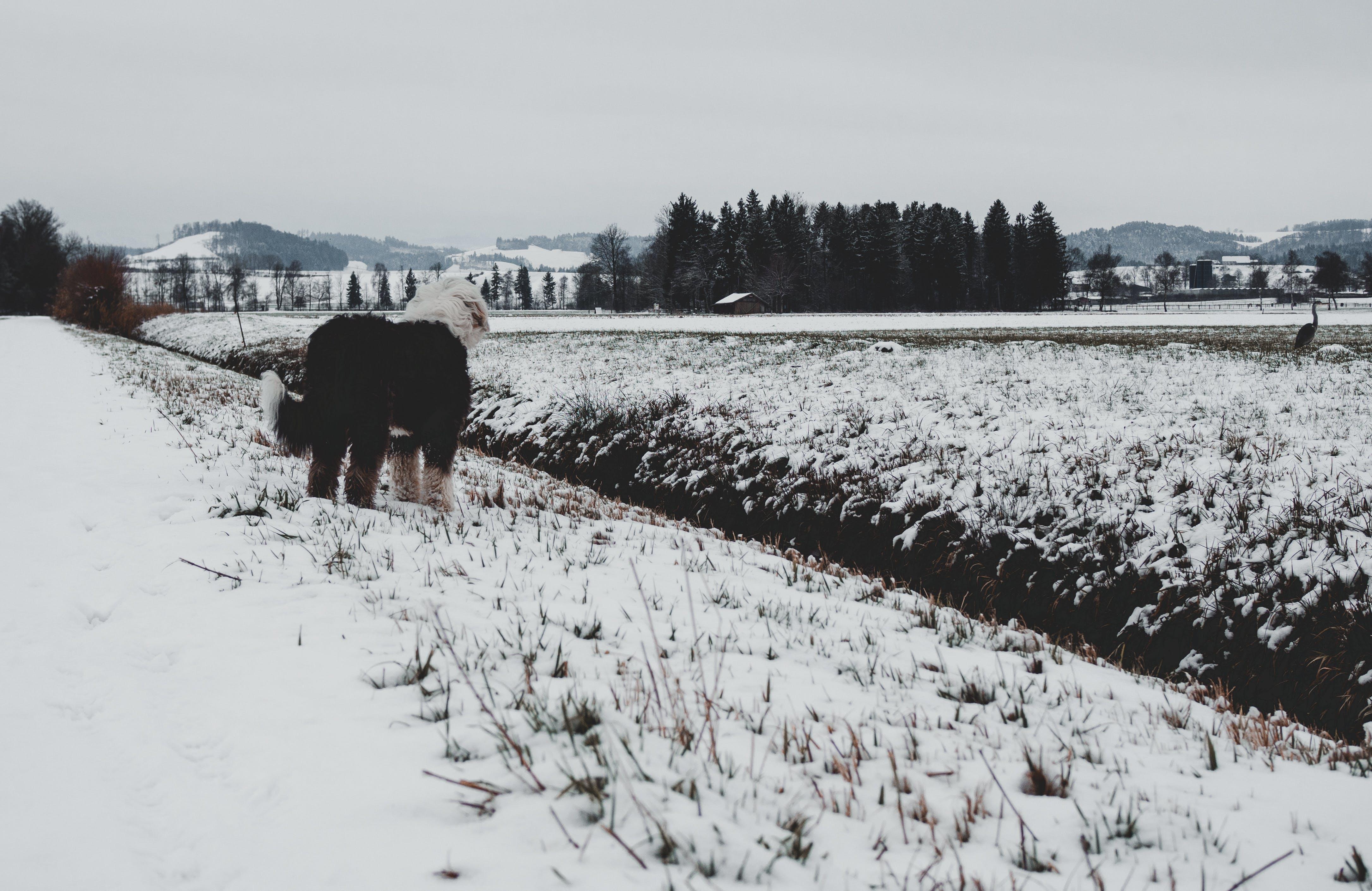Free stock photo of dark, dog, winter