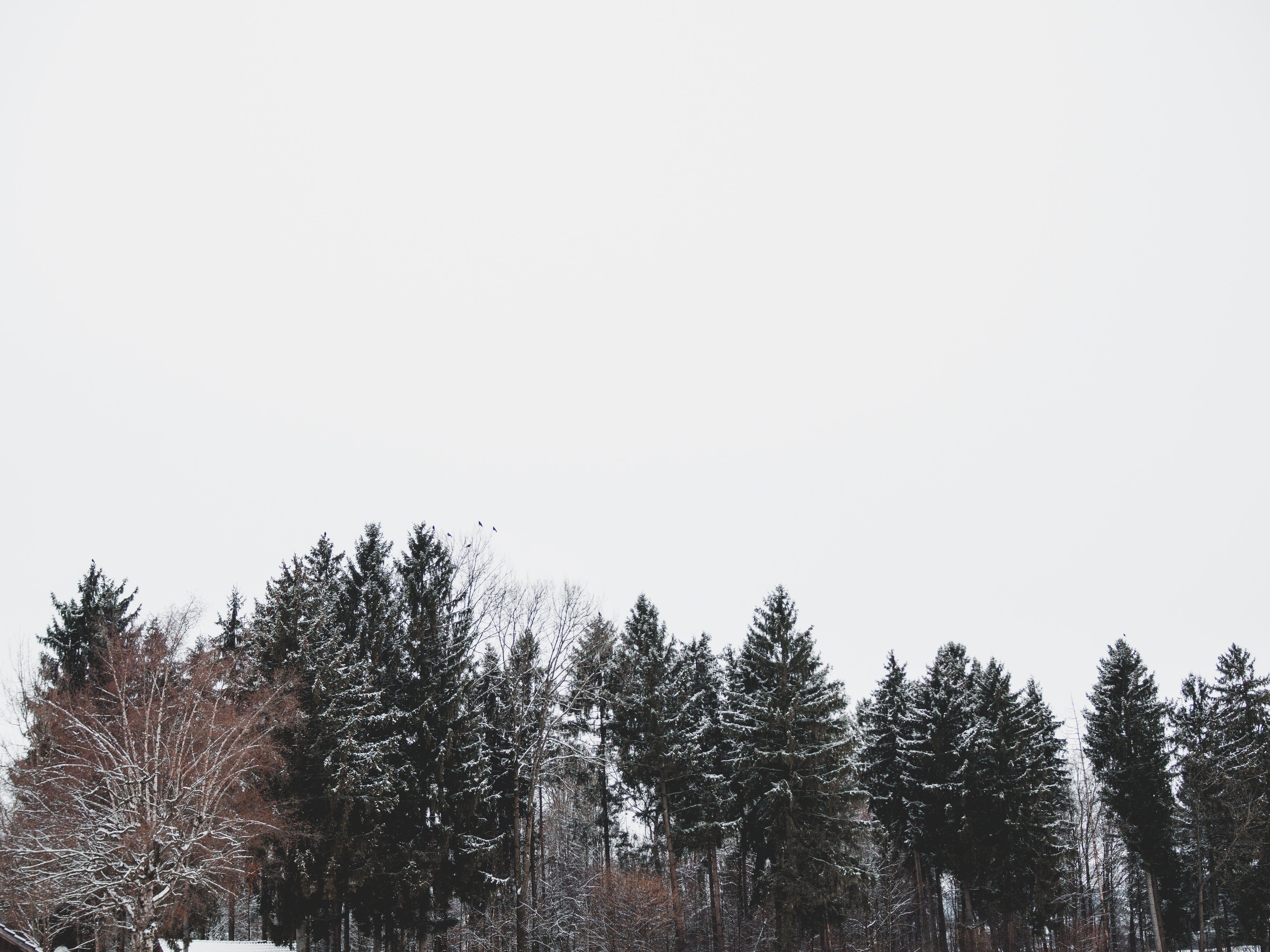 Free stock photo of dark, snow, trees, winter