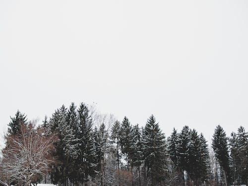 Fotos de stock gratuitas de arboles, invierno, nevar, oscuro