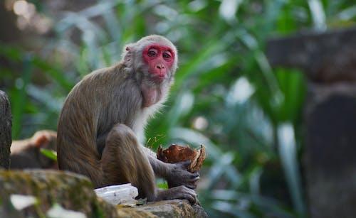 คลังภาพถ่ายฟรี ของ การกิน, การถ่ายภาพสัตว์, การถ่ายภาพสัตว์ป่า, ชีวิตสัตว์ป่า