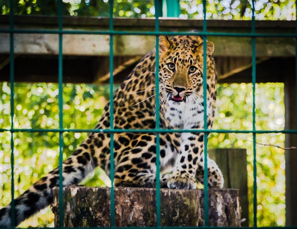 eläin, eläinkuvaus, eläintarha