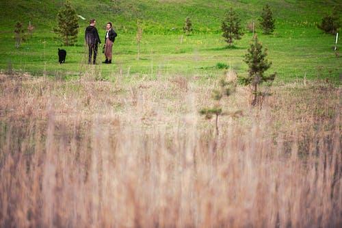 Gratis arkivbilde med grønn eng, grønt felt