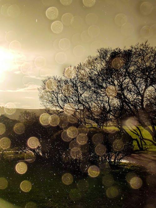 Gratis arkivbilde med bladløse trær, regndråper