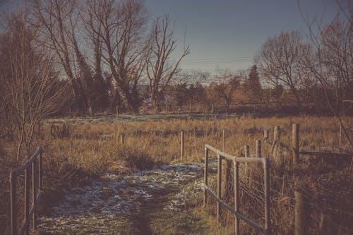 Ilmainen kuvapankkikuva tunnisteilla aita, este, luonto, maisema