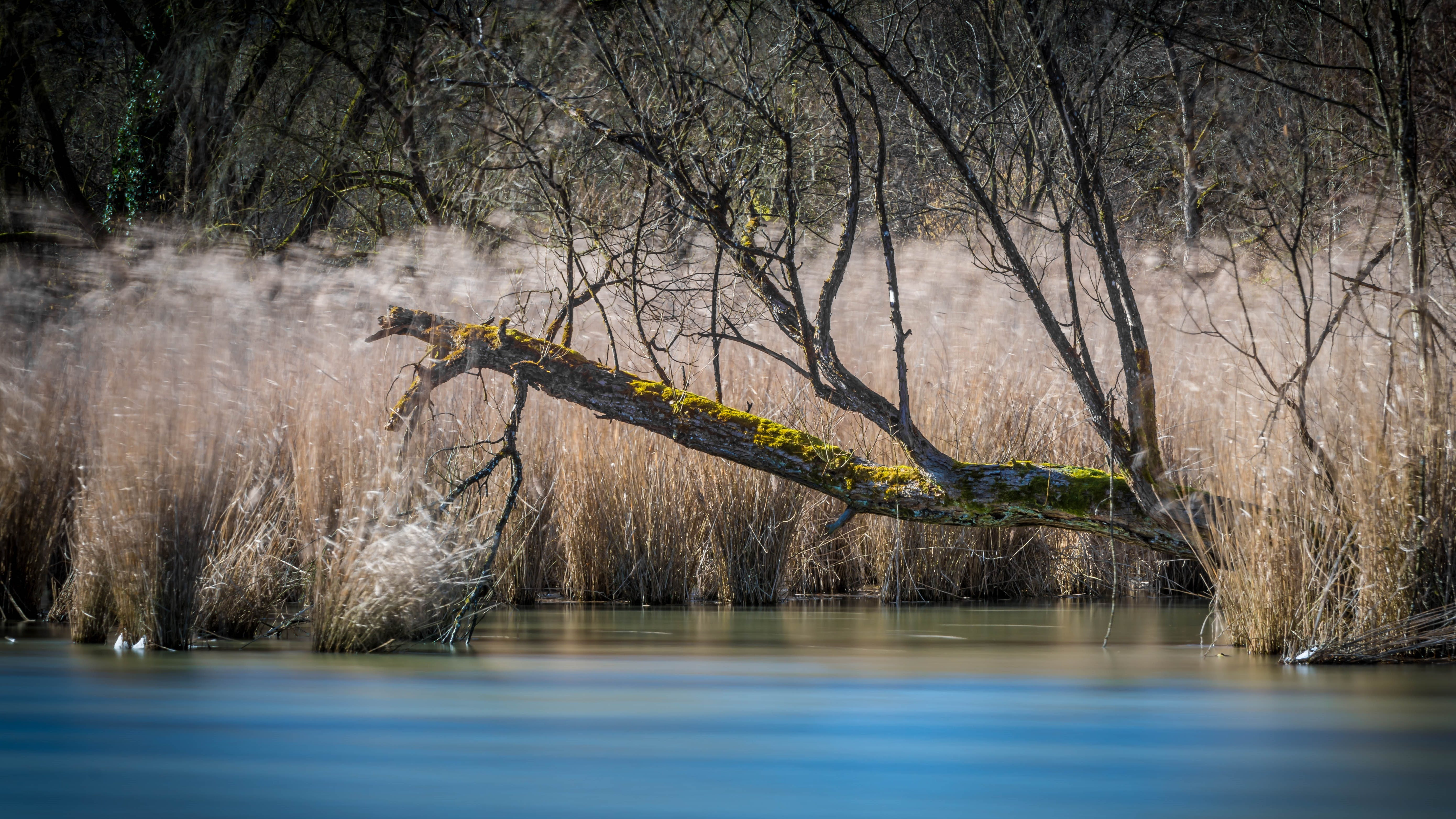 Dead Tree By The River