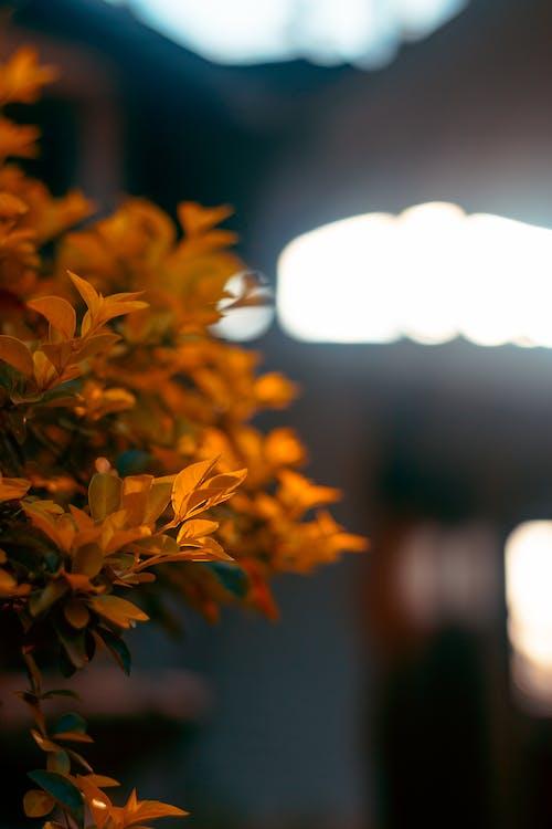 Free stock photo of fall, fall leaf, fall leaves