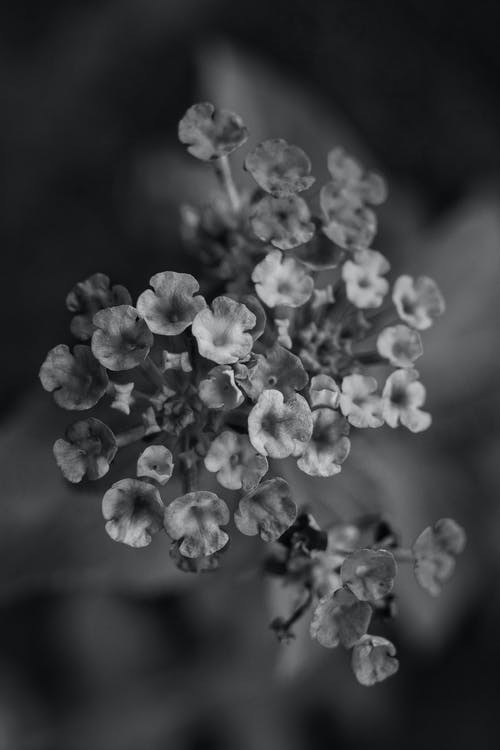 Black and white of blossoming flowers with gentle petals and pleasant scent growing on spring day