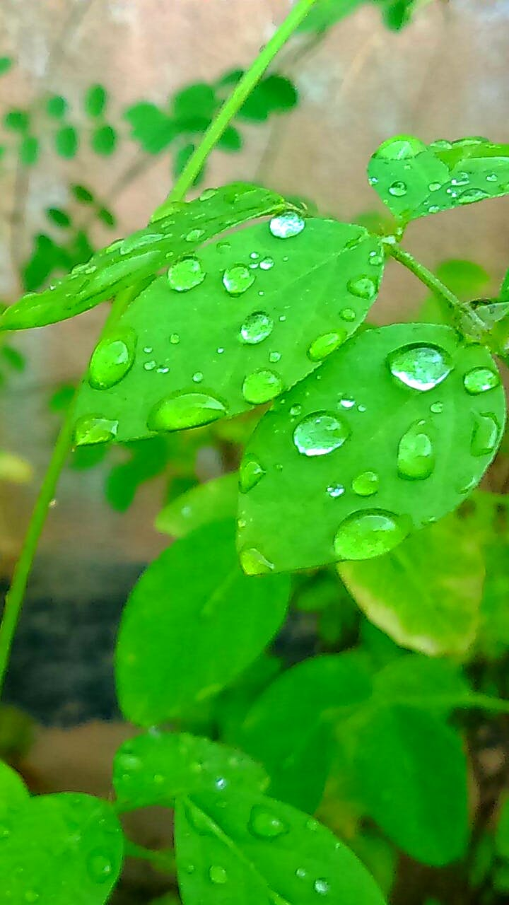 Green Leaf Plant With Water Droplets during Daytime