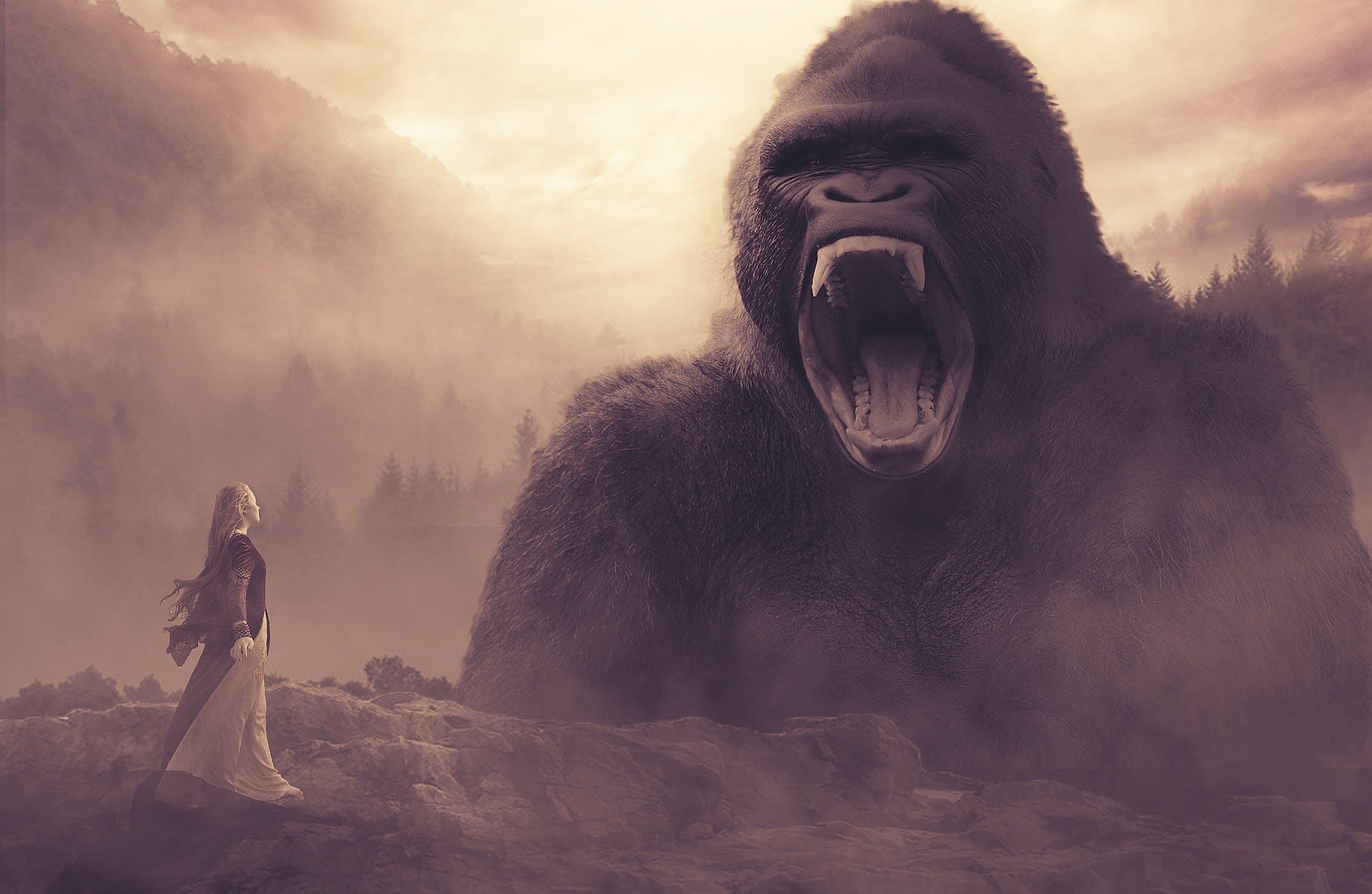 Kostenloses Stock Foto zu fels, felswand, gorilla, mädchen