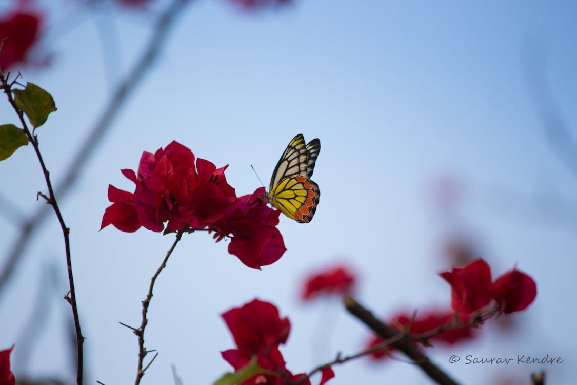 Imagine De Stoc Gratuită Cu Colorat Fluture Culoare Flori