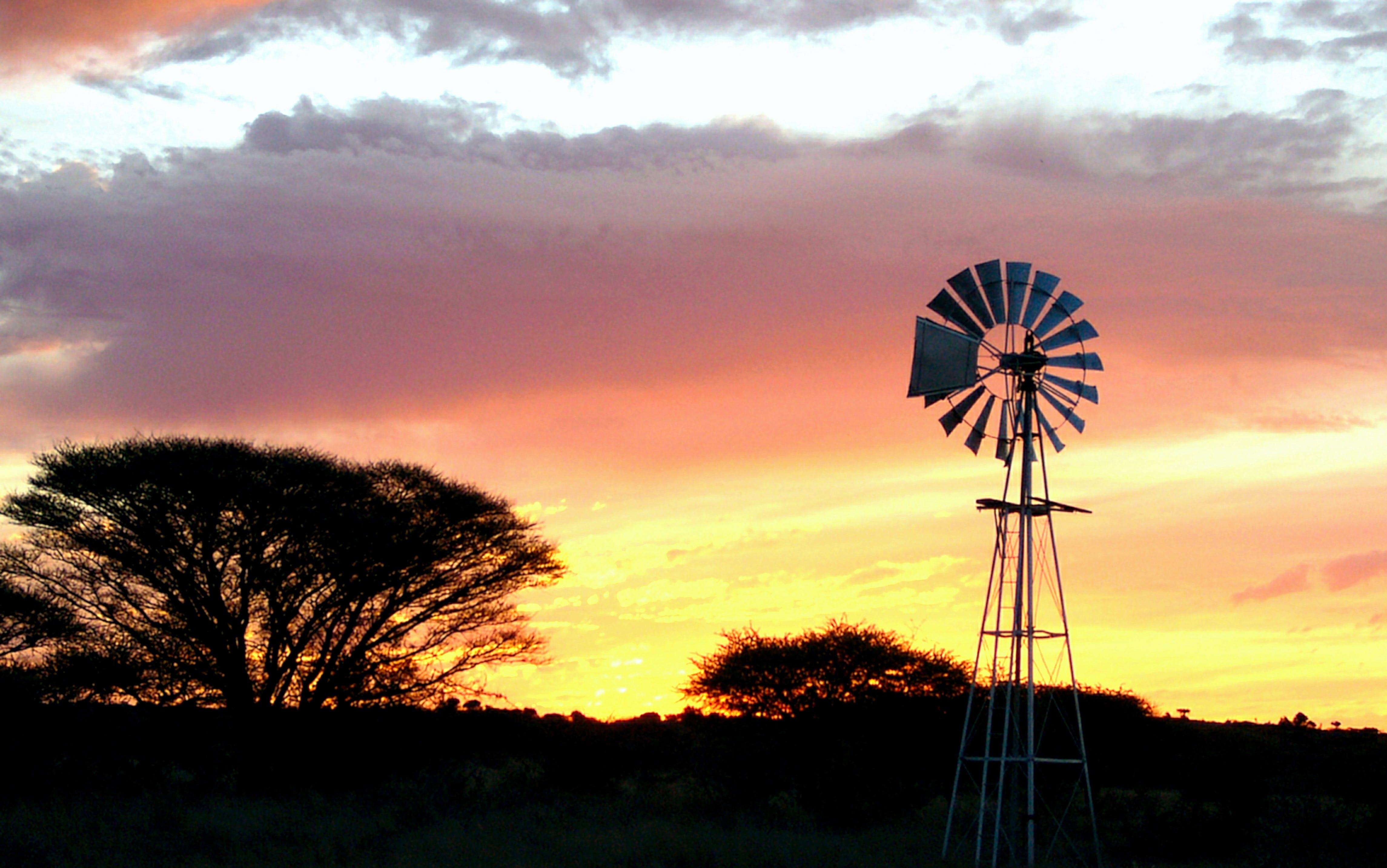 Free stock photo of acacia tree, africa, sunset, windmill