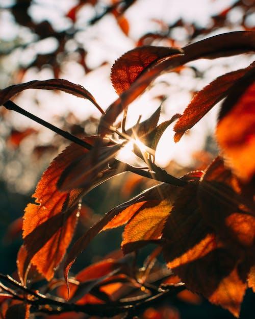 Free stock photo of golden sunset, ray of sunshine, sunset