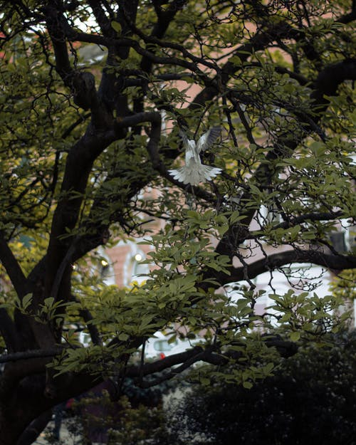 Free stock photo of bird, tree