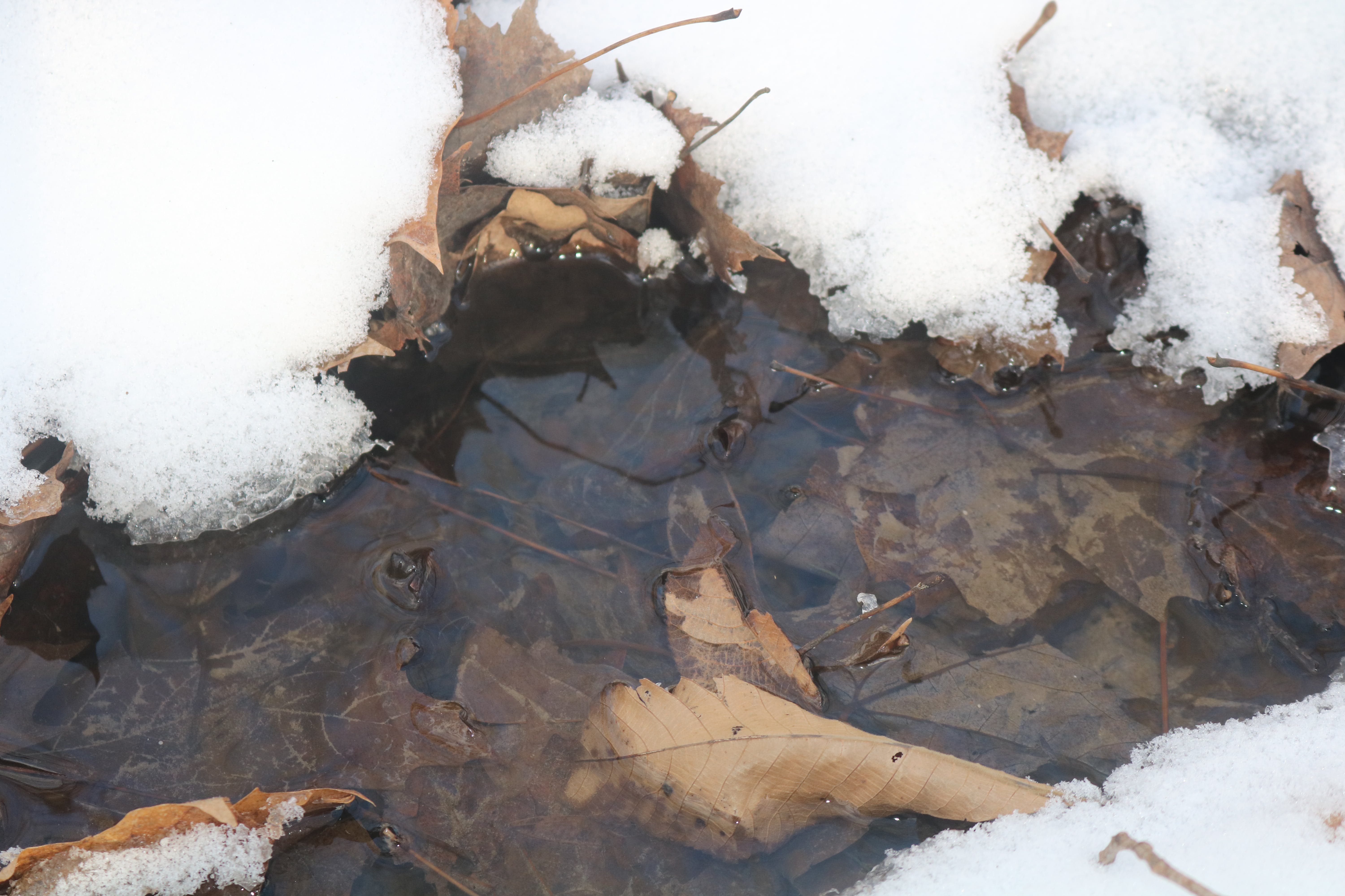 Free stock photo of cold, creek, snow, water