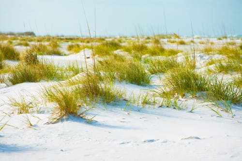 Photography of Grass on Sand