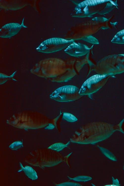 Photos gratuites de animaux, aquarium, aquatique