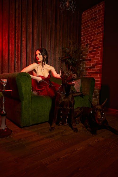 Elegant lady resting with dobermans in semi dark room