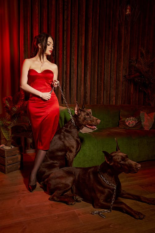Full body of elegant lady in dress standing near sofa and holding chain leash of dog sitting on floor