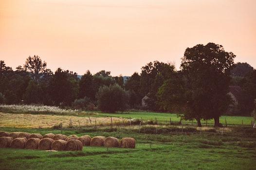 Free stock photo of dawn, landscape, field, trees