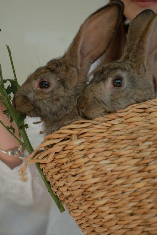 Fotobanka sbezplatnými fotkami na tému doma, králik, králiky