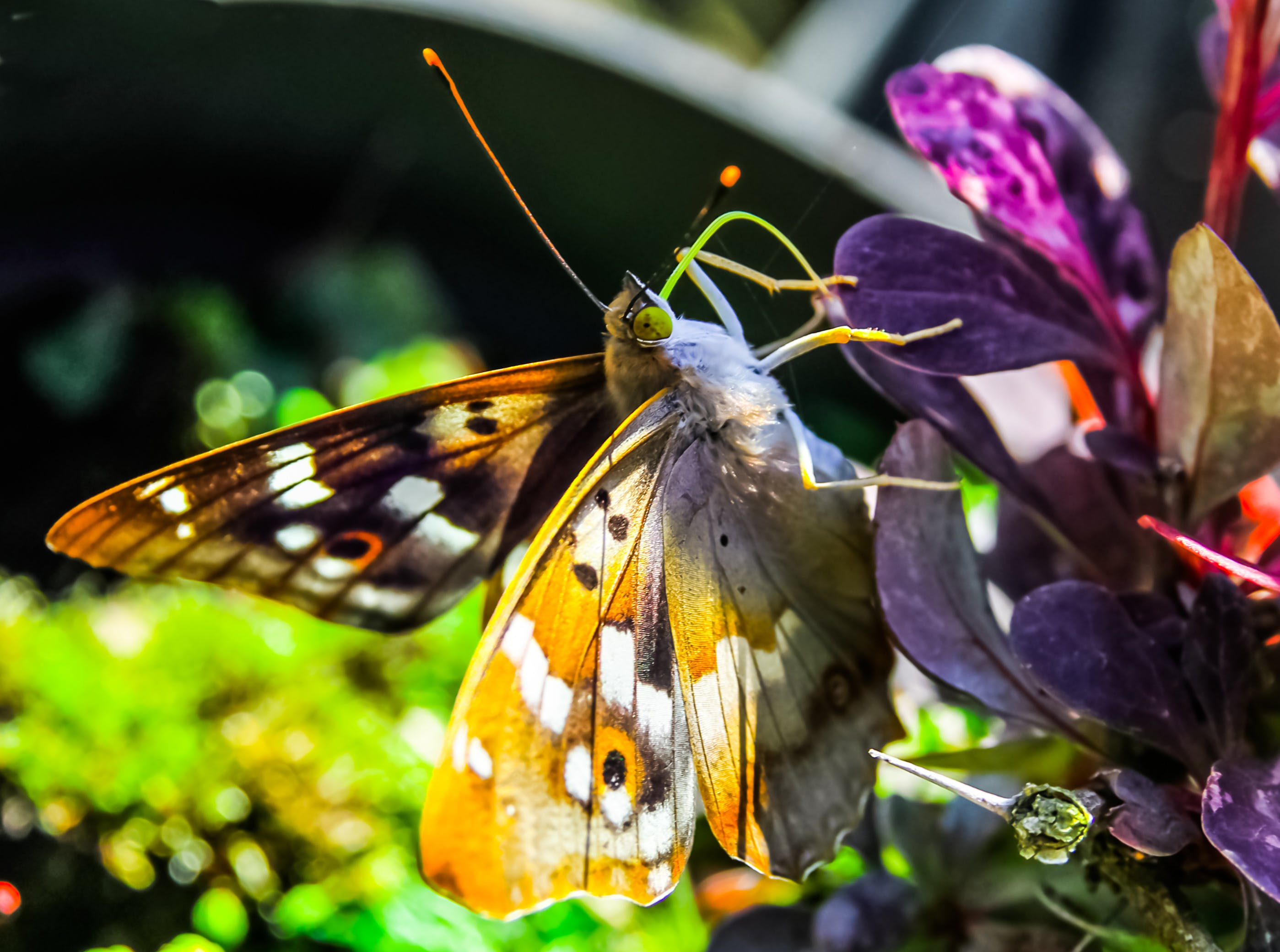 Closeup Photo of Brown and White Butterfly on Purple Leaves