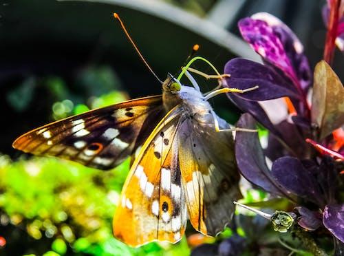 天性, 宏觀, 工厂, 昆蟲 的 免费素材照片