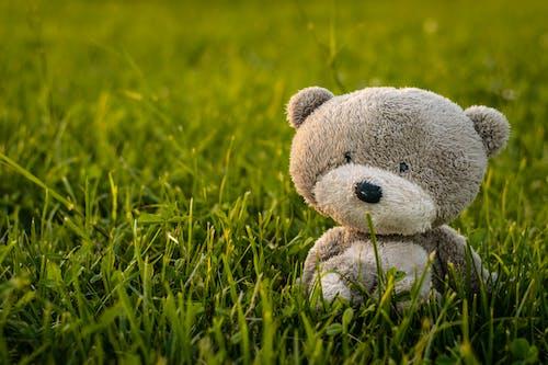 Fotos de stock gratuitas de animal de peluche, césped verde, efecto desenfocado