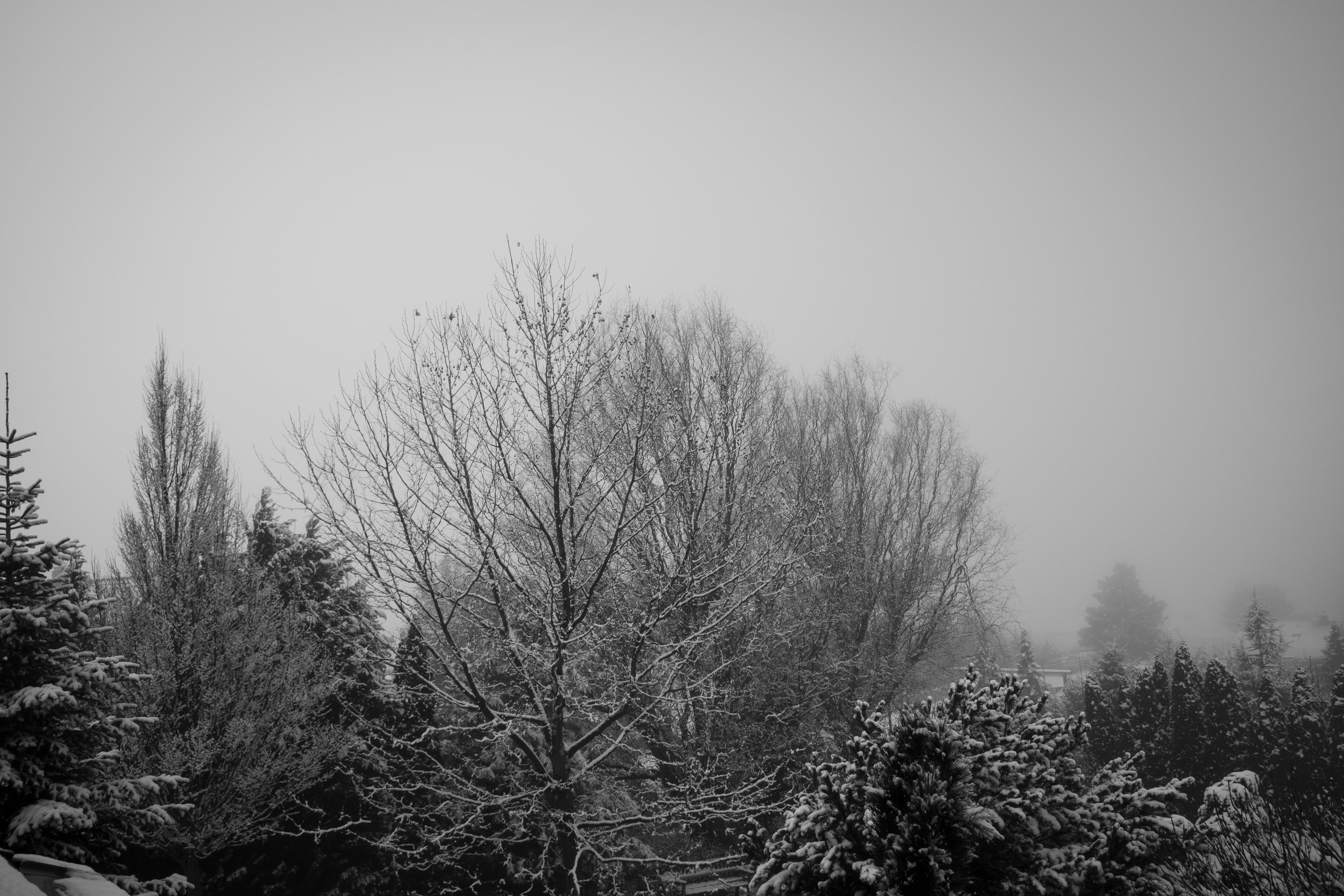 Free stock photo of black and white, bw, cold, fog