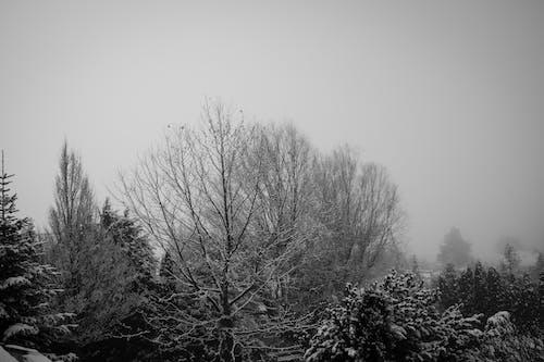 Photos gratuites de arbres, brouillard, brume, brumeux