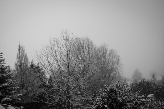 Free stock photo of cold, nature, trees, winter