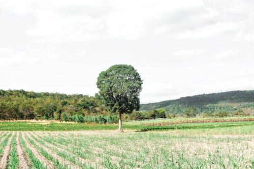 ağaç, alan, dağ, doğa içeren Ücretsiz stok fotoğraf