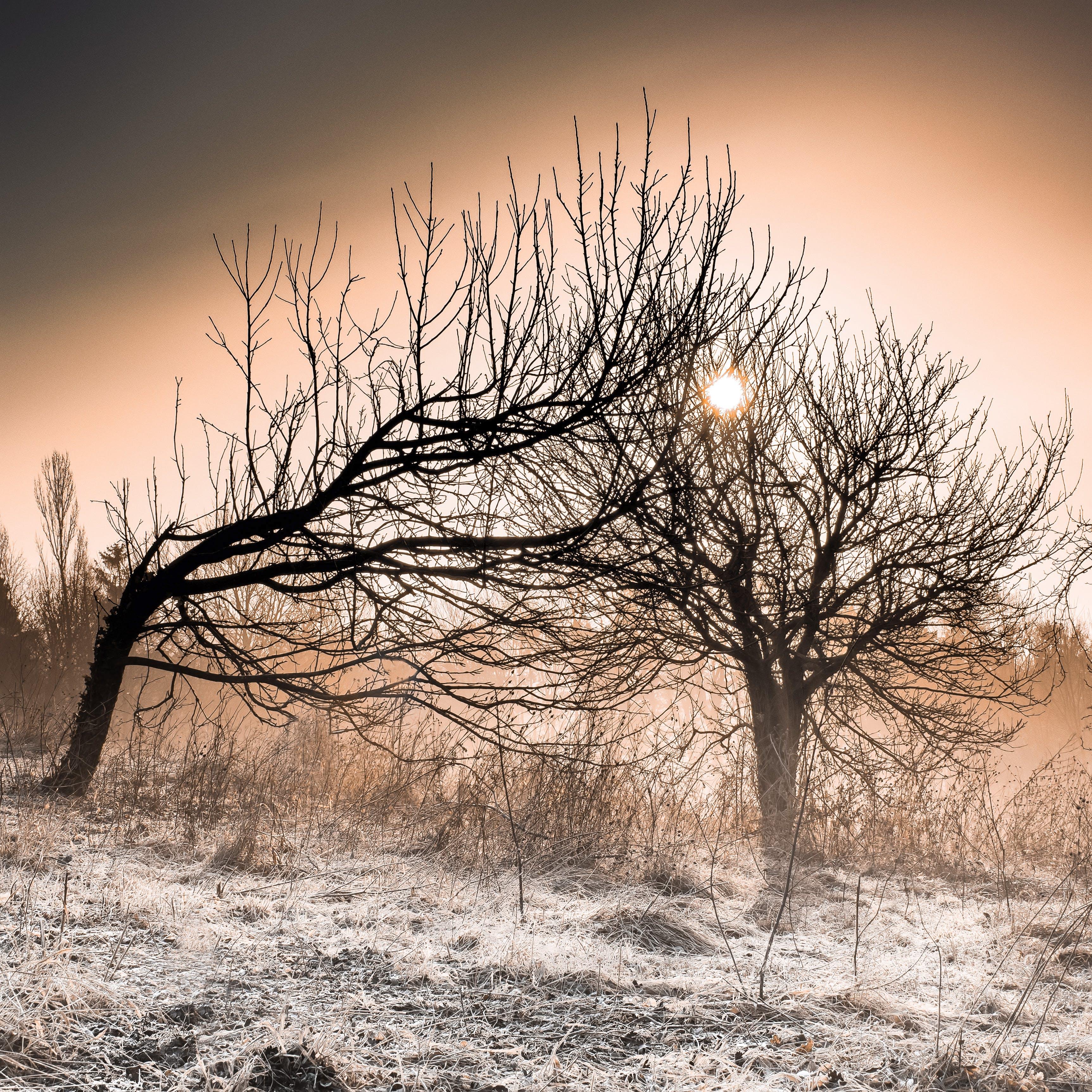 Gratis lagerfoto af grene, morgengry, sol, solnedgang
