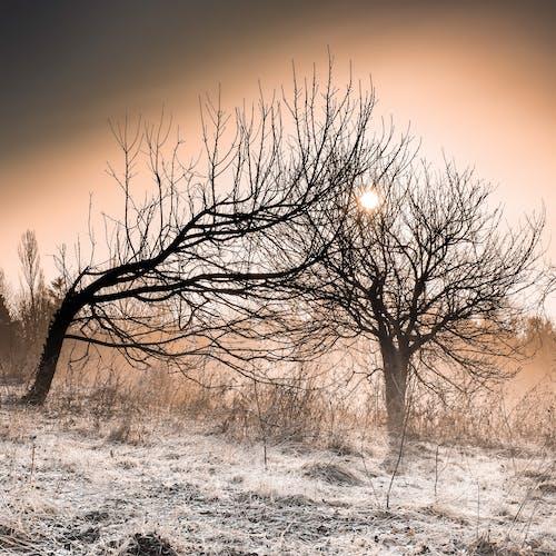 Fotobanka sbezplatnými fotkami na tému arídny, slnko, strom, stromy