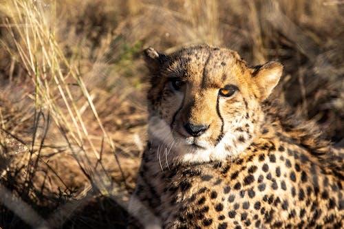 保護, 克魯格, 動物 的 免費圖庫相片
