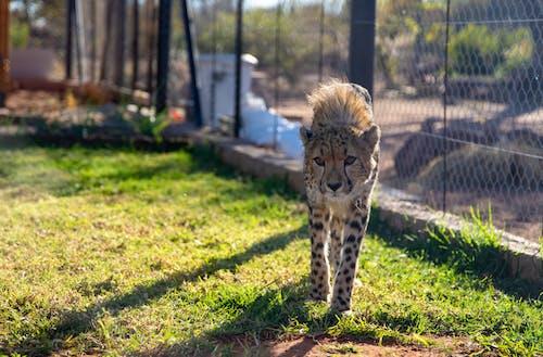 保護, 公園, 動物 的 免費圖庫相片